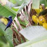 Bird watchers paradise, birds seen during lunch.