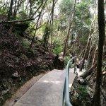 Alternative route, the jungle trail