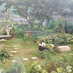 Photo of Macau Giant Panda Pavilion