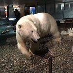 Foto de Svalbard Museum