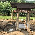 Pig & Shower at Milburns 2017