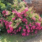 Photo of Greyfriars Chapel and Franciscan Gardens