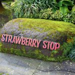 Photo of Strawberry Stop