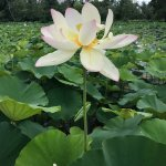 Photo de Kenilworth Park and Aquatic Gardens
