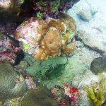 Reef Aguja