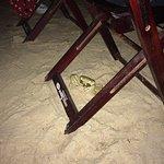 Restaurant les pieds dans l'eau, les crabes s'invitent à la table ;-)