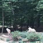 Photo de Parc Merveilleux