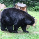 Great bear habitat