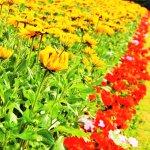 Well kept flower areas