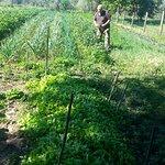Photo of Agrotourism Il Bettarello