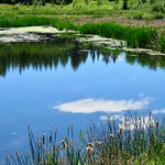Lots of wonderful ponds full of wildlife