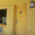 Backdoor entrance into our room - Mayflies everywhere, yuk!