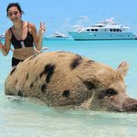 ginormous piggy