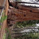 Grant tree base