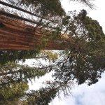 Grant tree top