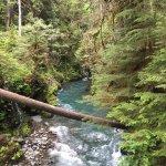 Quinault River-Pony Bridge Day Hike