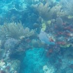 Just the average view under the sea at Key Largo