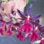 Orchids inside Botanical Garden