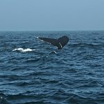 Capt Bill & Sons Whale Watch Photo