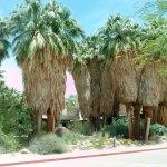 Photo of Living Desert Zoo & Gardens