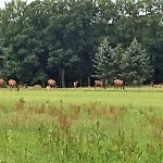 View of elk from the trail at the Elk Country Visitor Center.