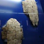 Oracle bone on turtle plastron
