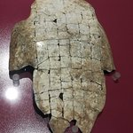Oracle bone on turtle plastron