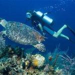 Scuba diving in tamarin mauritius