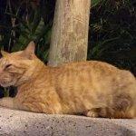 Hamilton le chat...il y a aussi coqueta la petite chienne, ils adorent les caresses!