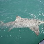 10 foot bull shark by my 11 yr old son ( he had a little help ; P )