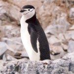 Photo of Antarctica Hostel