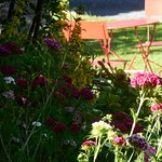 espace détente parmi les fleurs