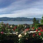 Bella Luna roses garden
