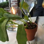 Believe it or not this isn't a decorative plant - it was one of the dishes!