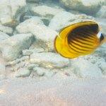 Domina Coral Bay Aquamarine Hotel Foto