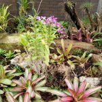 orchids, bromeliads and air plants