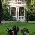 We were greeted by three turkeys on the front lawn.
