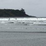 Photo of Tofino Surf School