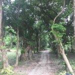 The Sopha Arboretum