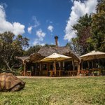 Chui Lodge main area and a resident tortoise
