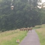 Enjoy a walk in Knockreer among the deer