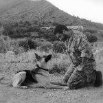 Entrenamiento de Perros da AndMore