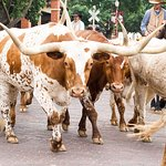 Header_longhorns_large.jpg