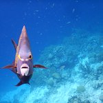 Caribbean Journal's Photo of the Week Winning photo! *Friendly Angel fish