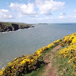 Ynys Aberteifi (Cardigan Island) from the side of Foel y Mwnt
