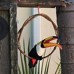 Decorative toucan at the entry