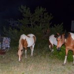 Photo de Assateague State Park Camping