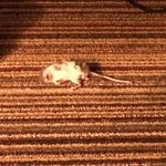 The smallest occupant of our room, a mouse our dog had to kill