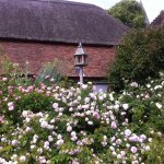 Scented roses in the clergy house garden