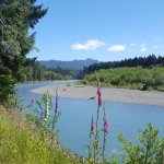 beautiful Hoh River and wildflowers